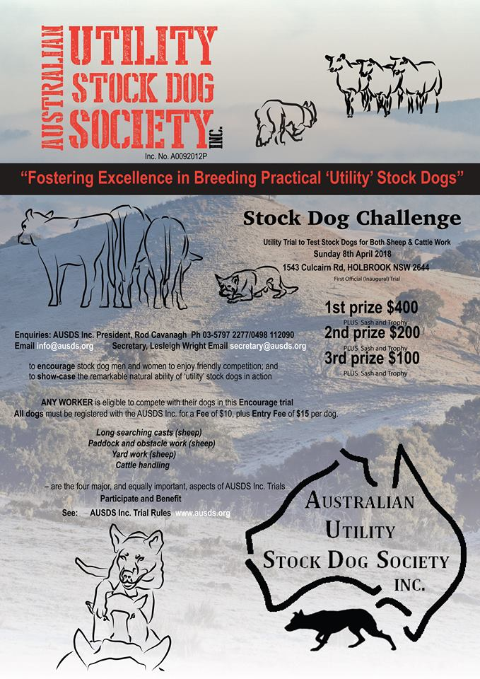 AUSDS Holbrook Sheep Cattle Dog Utility Trial April 2018